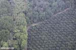Oil palm plantation in Costa Rica [costa_rica_aerial_0414]