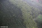 Palm oil in Costa Rica [costa_rica_aerial_0419]