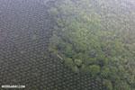 Palm oil in Costa Rica [costa_rica_aerial_0423]