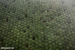 Oil palm plantation in Costa Rica [costa_rica_aerial_0428]