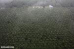 Palm oil in Costa Rica [costa_rica_aerial_0429]