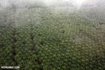 Oil palm plantation in Costa Rica [costa_rica_aerial_0430]