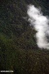 Aerial view of rain forest in Costa Rica [costa_rica_aerial_0445]