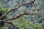Bromeliads in Costa Rica's cloud forest