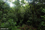 Rainforest near La Selva