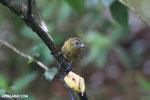 Bird [costa_rica_la_selva_0199]