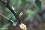 Bird [costa_rica_la_selva_0200]