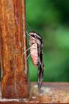 Moth [costa_rica_la_selva_0281]