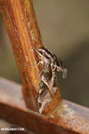 Moth [costa_rica_la_selva_0287]