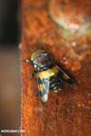 Insect [costa_rica_la_selva_0288]