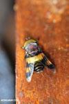 Insect [costa_rica_la_selva_0293]