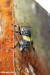 Insect [costa_rica_la_selva_0300]