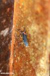 Insect [costa_rica_la_selva_0301]