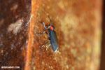 Insect [costa_rica_la_selva_0302]