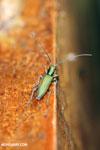 Insect [costa_rica_la_selva_0303]