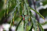 Hummingbird [costa_rica_la_selva_0454]