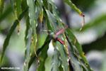 Hummingbird [costa_rica_la_selva_0456]