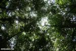 Osa rain forest