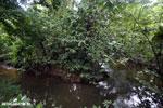 Rainforest creek [costa_rica_la_selva_0712]