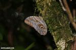 Butterfly [costa_rica_la_selva_0782]