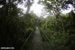 Canopy walkway [costa_rica_la_selva_0854]
