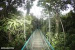 Canopy walkway [costa_rica_la_selva_0856]
