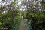 Canopy walkway [costa_rica_la_selva_0865]