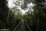 Canopy walkway [costa_rica_la_selva_0866]