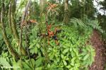 Palm seeds [costa_rica_la_selva_0894]