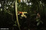 Palm seeds [costa_rica_la_selva_0918]