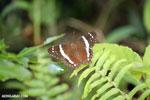 Butterfly [costa_rica_la_selva_1191]