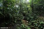 Rainforest creeks