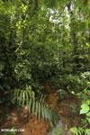Rainforest creeks [costa_rica_la_selva_1271]
