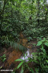 Rainforest creeks [costa_rica_la_selva_1282]