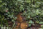 Rainforest creeks [costa_rica_la_selva_1285]