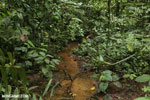 Rainforest creeks [costa_rica_la_selva_1286]