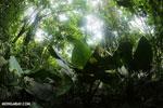 Rainforest vegetation in Costa Rica