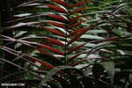 Palm fron [costa_rica_la_selva_1322]