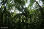 Central American rainforest