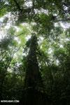 Central American rainforest [costa_rica_la_selva_1340]
