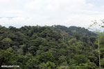 Rainforest in Costa Rica [costa_rica_la_selva_1386]