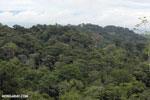 Rainforest in Costa Rica [costa_rica_la_selva_1387]
