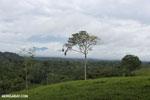 View of La Selva rainforest and Central mountain range of Costa Rica [costa_rica_la_selva_1393]