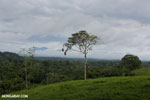 View of La Selva rainforest and Central mountain range of Costa Rica