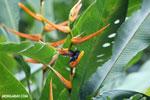 Hummingbirds [costa_rica_la_selva_1513]
