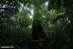 Rainforests [costa_rica_la_selva_1739]