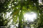 Rainforests [costa_rica_la_selva_1749]