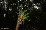 Epiphyte [costa_rica_la_selva_1755]