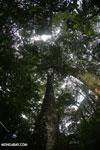Rainforests [costa_rica_la_selva_1759]