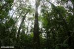 Rainforests [costa_rica_la_selva_1765]